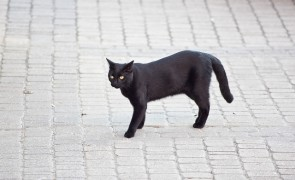 Russian omens and superstitions